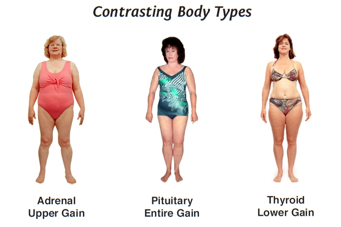 Women's body types require unique diets